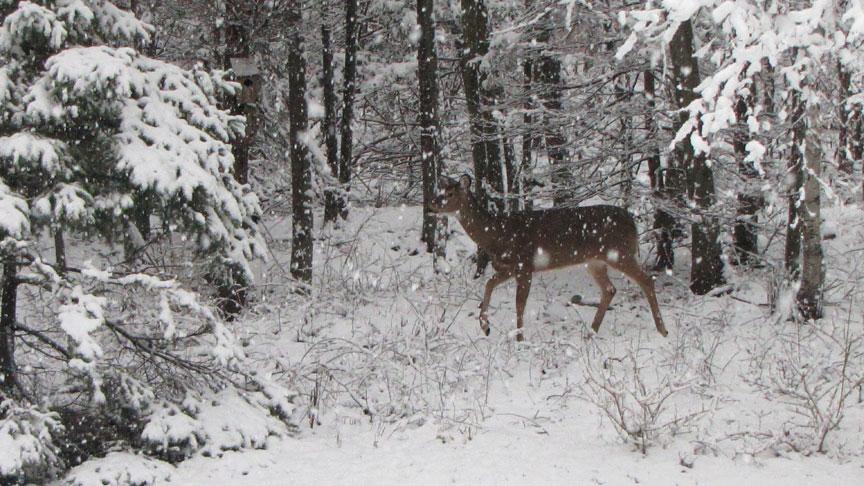 deer_snow