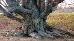 fat_tree