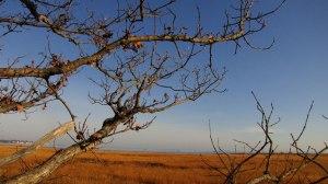 hammo_branches