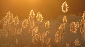 seagrass_sunset