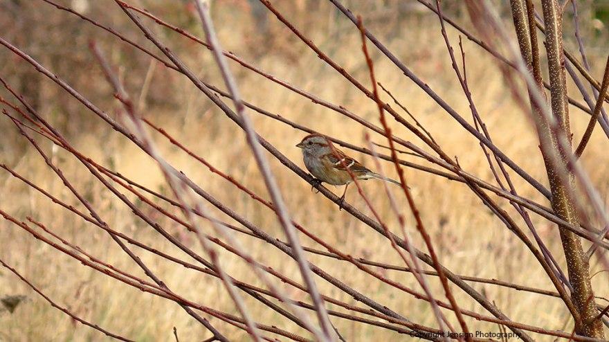 sparrow_img_7728