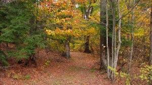 trail3