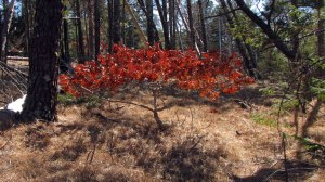 tree-(2)