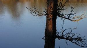tree_reflec