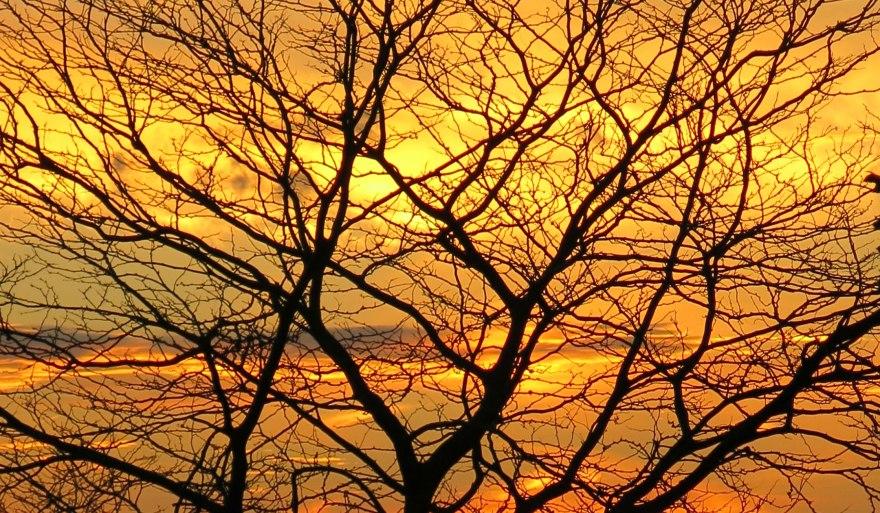 tree_sun4