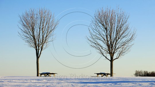 Picnic Tables in Winter