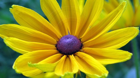 yellow_flower2