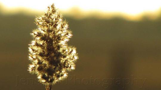 Backlit Weed