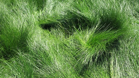 Swirly Grass