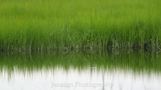 Green Grass on edge of water