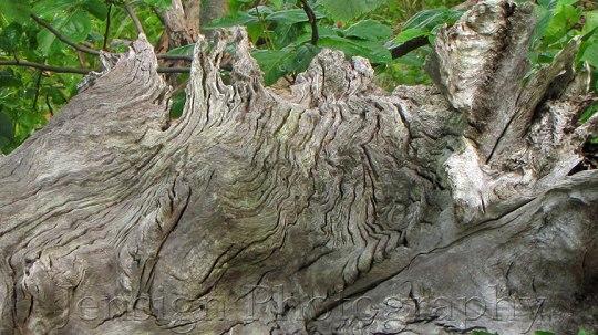 NatureDesignIMG_0449