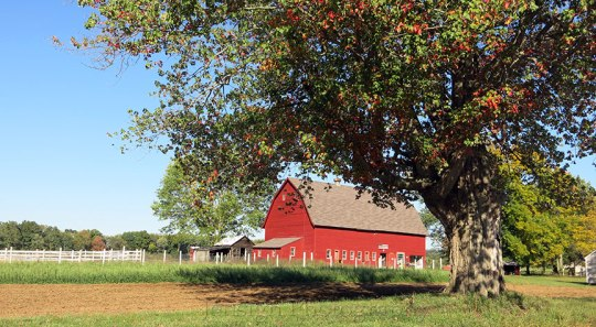Red Barn and tree