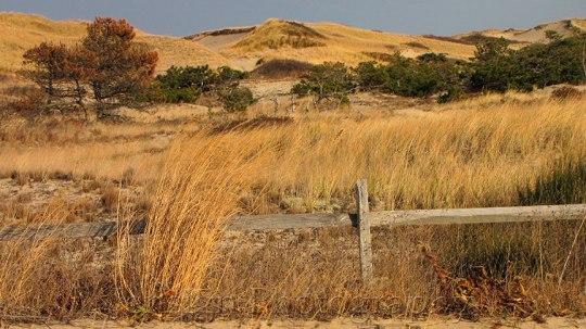 Dunes_IMG_2113