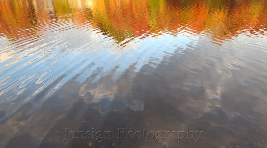 reflection_foliage_IMG_3159