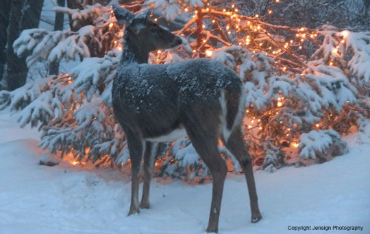 deer_xmas_lights_w