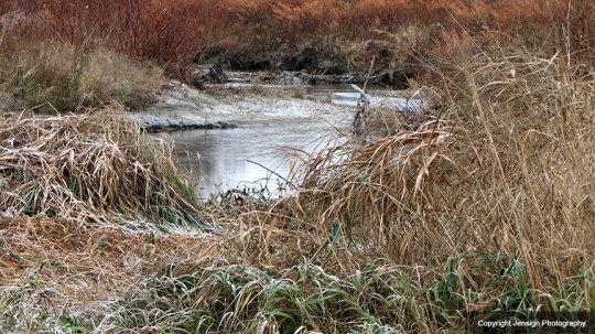 Stowe_ice_grass