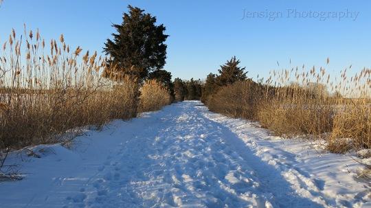 Road_Hammo_snow_IMG_1504