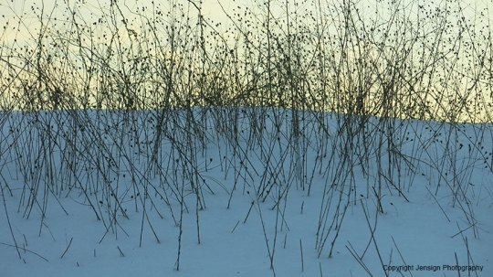 winter_weeds_IMG_0648