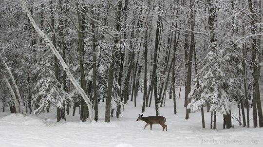 deer_IMG_2361w