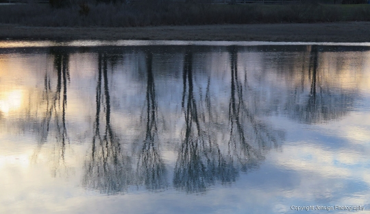 Alewife_reflections_IMG_7914
