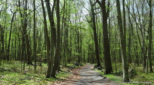 BP_trail_IMG_0864