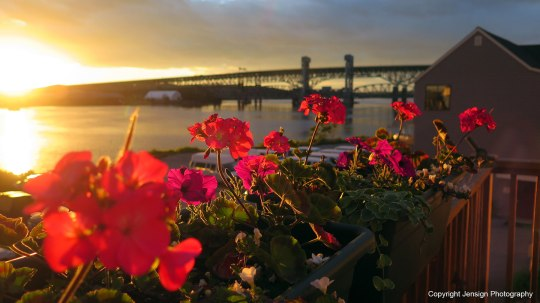 sunset_geraniums_IMG_1736