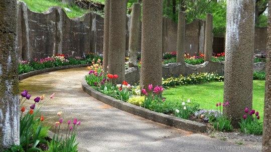 Crane_tulips_IMG_7964